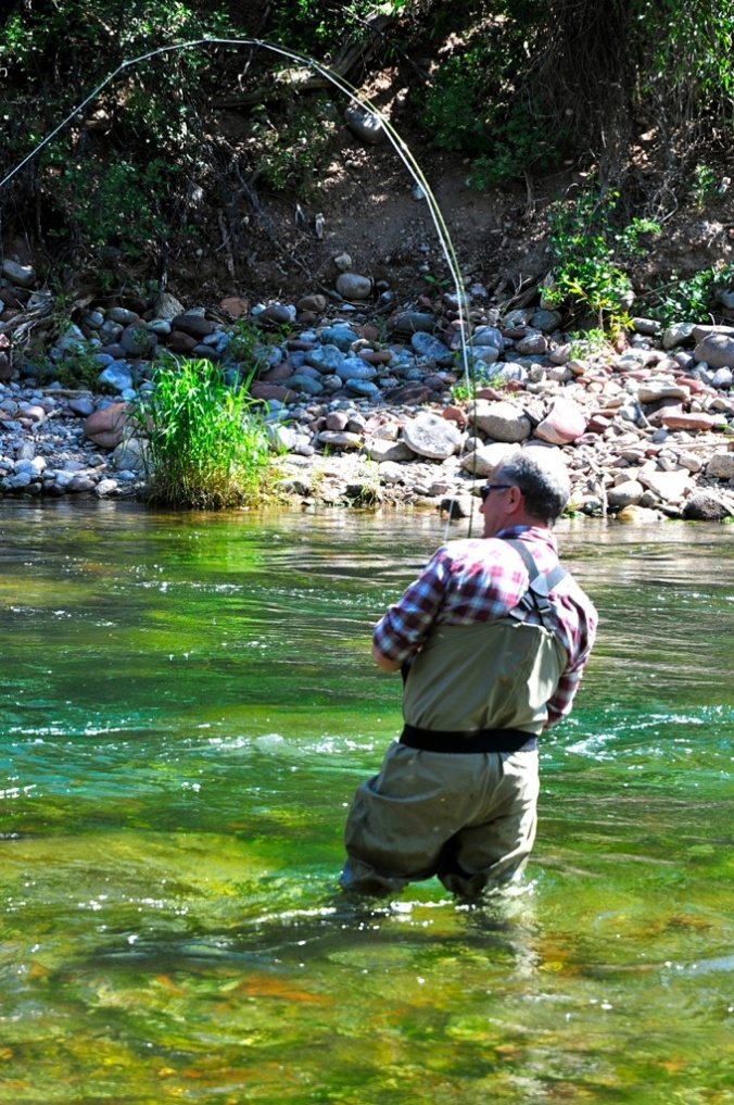 Fly fishing for trout in the roaring fork valley river for Roaring river fishing