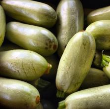 MARTHA'S U-PICK, HOMESTEAD, FL - Korean style zucchini