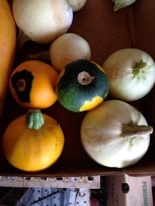 Some of Martha's more petite pumpkin and squash varieties, including Seminole to the bottom left.