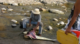 Fresh mahi caught in a stream off the coast in Macouba.