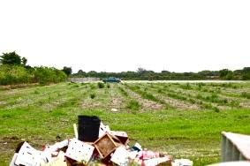 Corona Farm