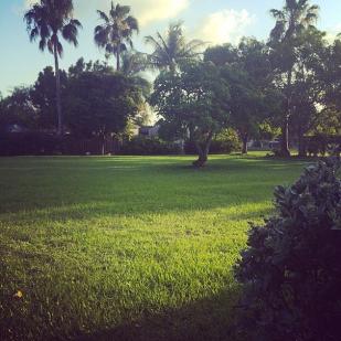 Niven's yard!
