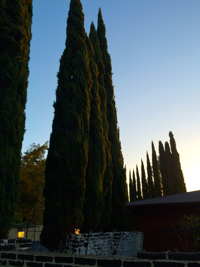 Cypress give that old world feeling in new world wine country.