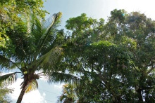 Brad's Haden tree.