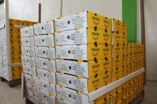 Ready to Ship Mangoes