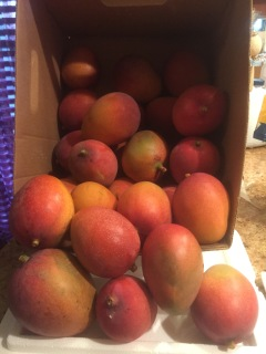 Mango overload!