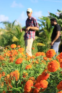 Behind the marigolds is the kids garden, part of Verde's educational outreach programming.