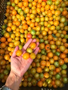 Sweet Sungolds, the perfect tomato according to me! A nice level of salinity in the juice means you don't even need salt to pop them like candy.