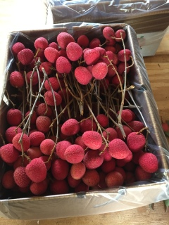 Just picked Brewster lychees pretty in pink.