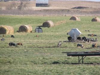 The Willis Family Farm today.
