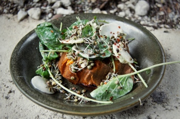 Wood Oven Roasted Sweet Potato with sprouted lentils, Tokyo turnips, upland cress, tahini sauce, Aleppo
