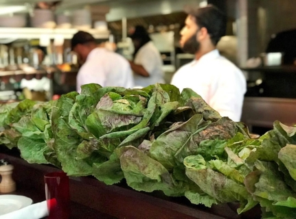 Radicchio from Mother Earth Miami